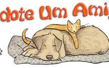 Adoção De Cães E Gatos