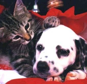 Terapia Para Cães E Gatos