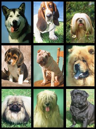 Saiba Qual Cachorro Combina Com Você