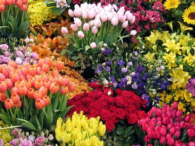 Dicas de Flores para o Dia das Mães