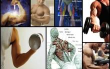 Benefícios e Malefícios Dos Anabolizantes