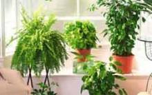Plantas Para Enfeitar Sua Casa