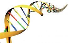 Como Fazer o Exame de DNA Gratuito