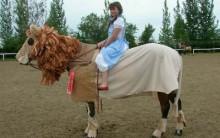 Fantasias para Cavalo – Fotos