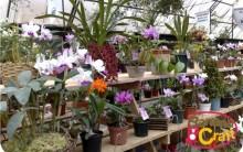 Espécies De Orquídeas