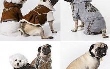Faça Roupas Caseiras Para Cachorro
