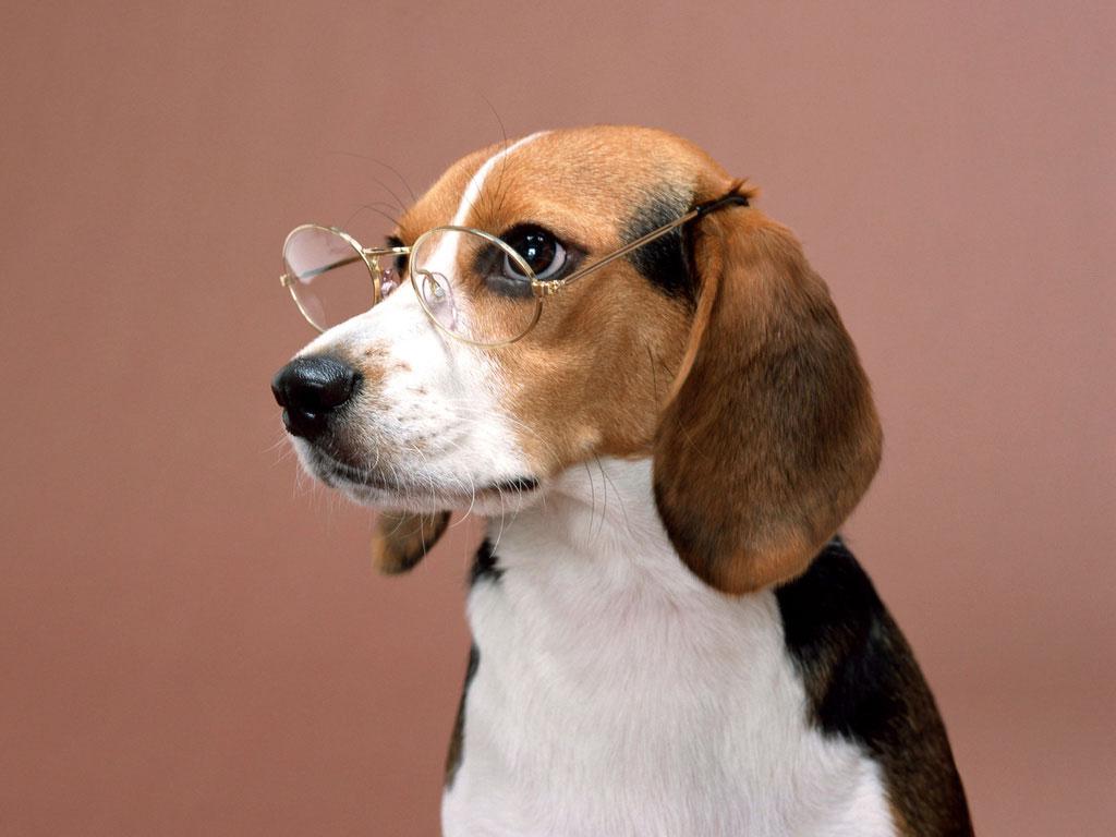 Teste De Visão De Cães