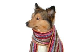 Moda- Cachecol Para Cães