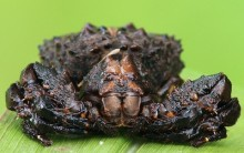 Aranhas – Dez Tipos Diferentes