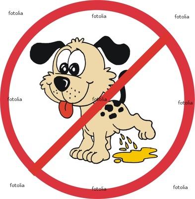 Xixi No Lugar Certo – Eduque O Seu Cão