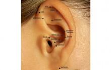 Auriculoterapia – O Que é e Como Funciona Para Emagrecer