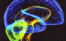 Exercitar O Cérebro