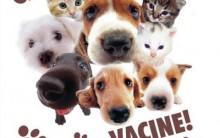 Vacina Contra Raiva Em São Paulo – Gratuito