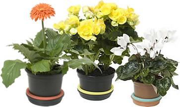 Dicas Para Trocar Os Vasos Das Plantas
