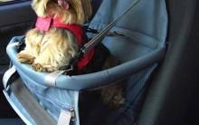 Cadeirinhas De Carro Para Cachorro