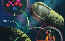 A Super Bacteria KPC – O Que é Superbactérias KPC