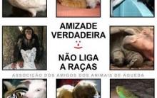 Arca Brasil Proteção de Animais