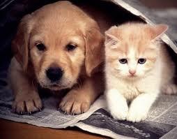 Dicas de Animais Que Podem Ser Criados em Apartamentos