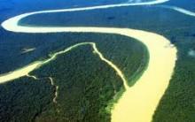 Floresta Amazônica Um lugar Constituido De Plantas.