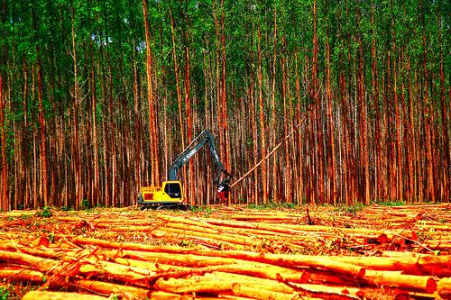 Os Locais Que Estão Com Mas Riscos De Desmatamentos No Brasil
