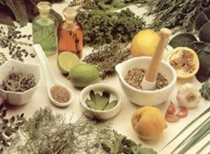Plantas Medicinais e Seus Benefícios