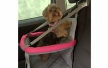 Assentos de Carro Para Cachorros – Onde Comprar