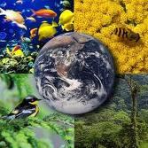 Conceitos Ou Sustentabilidade
