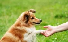 Adestramento de Animais – Melhores Lugares Para Adestrar