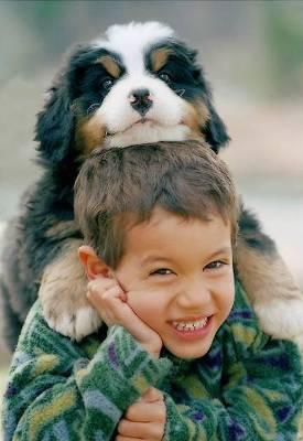 Cachorros e as Doenças – Como Evitar