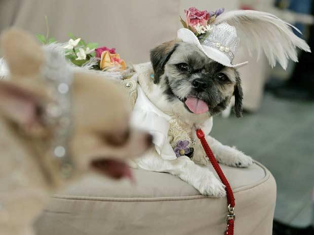 Concurso Anual de Cães em Nova York