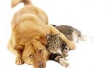 Como Escolher Animal De Estimação – Dicas