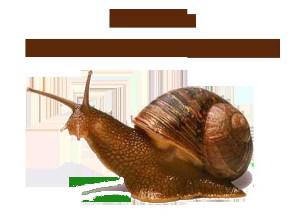 Creme Baba De Caracol