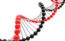 Dieta Do DNA – Conheça A Dieta Moderna