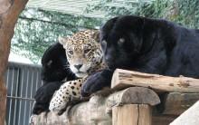 Zoológico de Salvador- Fotos e Informações