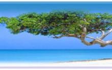 Férias em Aruba No caribe – Melhores Hotéis