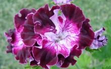 Fotos Flores Ornamentais Para Decoração