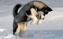 Cachorros Mais Bonitos do Mundo – Fotos