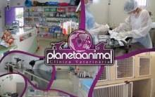 Planeta Animal – Clínica Veterinária