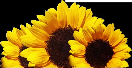Floriculturas Beija-Flor- Informações