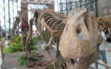 Exposição de Dinossauros no Shopping Morumbi