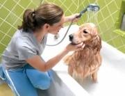 Pet Shop –  Melhores Pet Shops de SP – Endereços e Mais