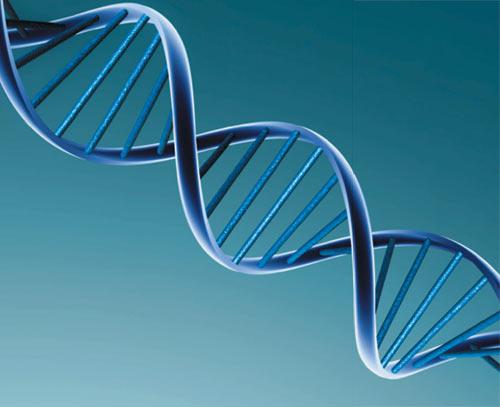 Células Tronco – O Que é