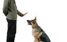 Como Ensinar o Cão a Não Latir – Dicas