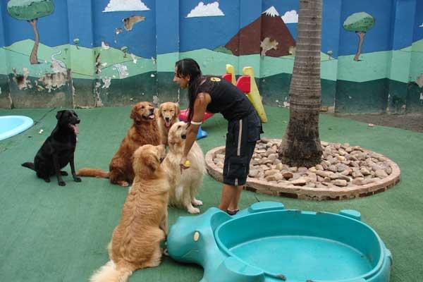 Hotéis Para Cachorro em São Paulo- Melhores Hotéis Para Cachorro- Onde Deixar o Cachorro