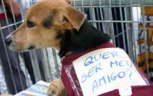 Adoção de Animais em SP – O Que Fazer Para Adotar um Cachorro
