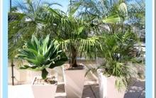 Modelos de Plantas Mais Usadas na Decoração de Jardins-Fotos