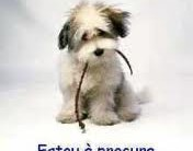 Raças De Cachorros Para Apartamento- Dicas e Fotos