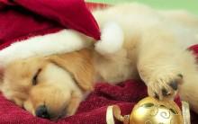Significados dos Símbolos de Natal – Informações