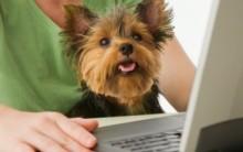 Loja de Pet Shop Online – Informações, Produtos, Preços