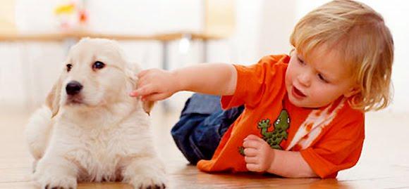 As Melhores Raças de Cachorros Indicadas Para Crianças – Ver Fotos, Dicas